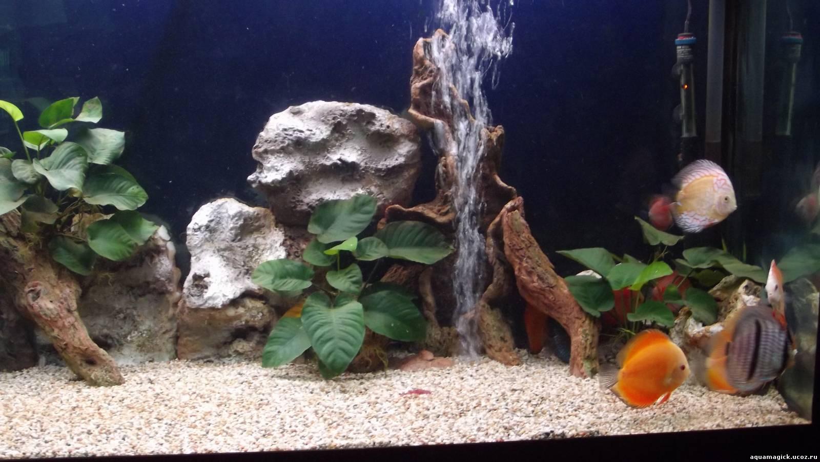 Как красиво оформить аквариум на 100 литров своими руками 51