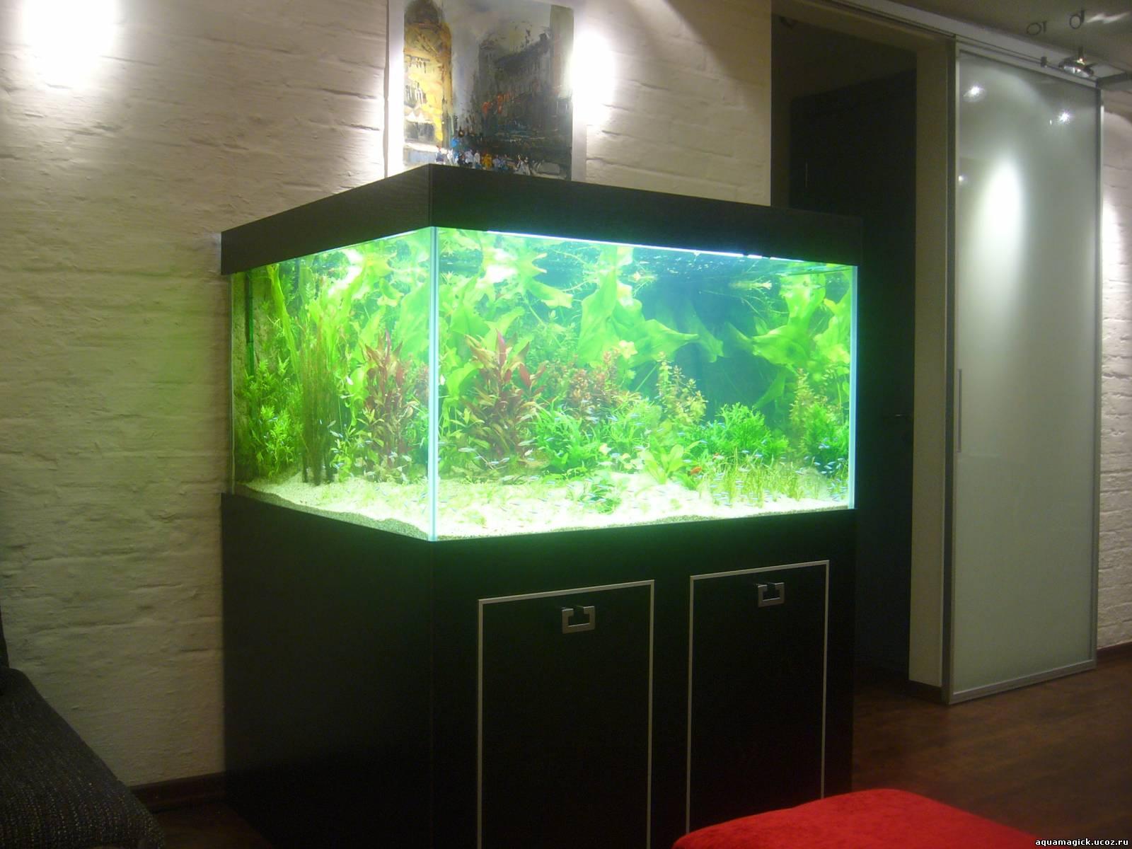Аквариум травник 500 литров в офисе - Наши работы - Фотоальбомы - Магия Аквариума